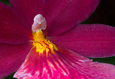 Photograph - Into The Orchid by Dale Kincaid