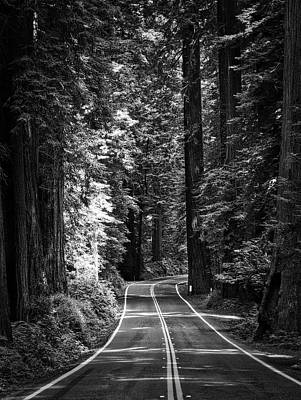 Photograph - Into The Redwoods by Mark David Gerson