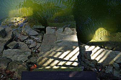 Photograph - Into The Water by Sharon Popek