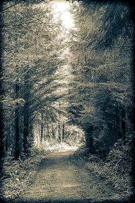 Photograph - Into The Woods 2 by Ronda Broatch