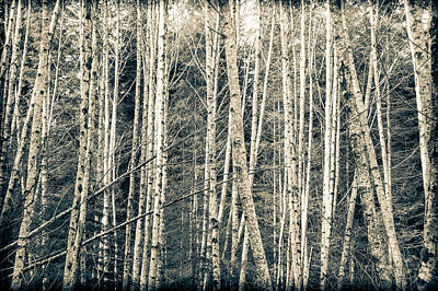 Photograph - Into The Woods 3 by Ronda Broatch