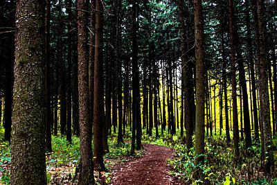 Photograph - Into The Woods by Allan Millora