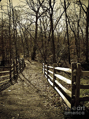 Brown Tones Photograph - Into The Woods In Sepia by Colleen Kammerer