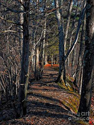Photograph - Into The Woods We Go by Marcia Lee Jones