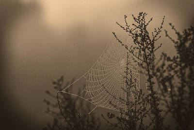 Photograph - Intricate Design by Dave Hall