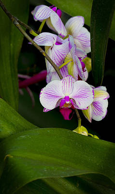 Flowers Photograph - Intricate Orchid by Robert Storost