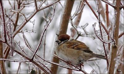 Photograph - Inverno by Halina Nechyporuk
