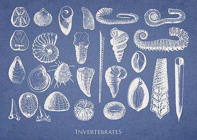 Invertebrates Drawing - Invertebrates by Aged Pixel