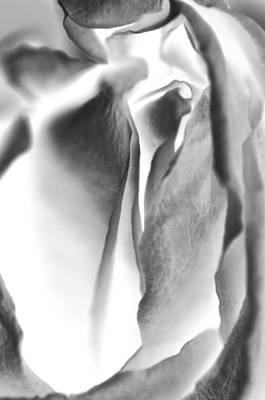 Inverted Rose Art Print