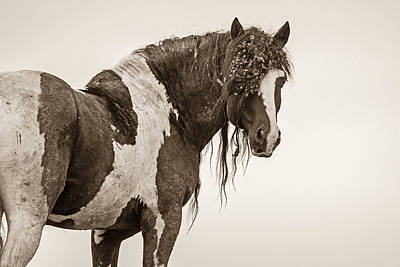 Forelock Photograph - Invincible by Sandy Sisti