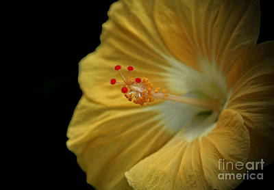 Invitation To Beauty Hibiscus Flower  Art Print by Inspired Nature Photography Fine Art Photography