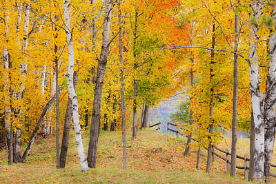 Photograph - Inviting Autumn Woods by Alan L Graham