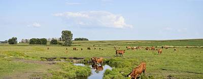 Photograph - Iowa Cattle Ranch by Bonfire Photography