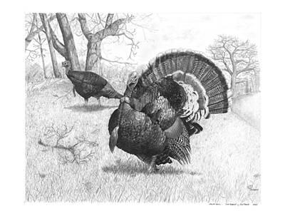 Wild Turkey Drawing - Iowa Gobbler by Cody Thorne
