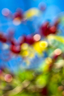 Autum Abstract Photograph - iPhone Case - Colors Of Autumn by Alexander Senin