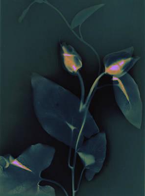 Ipomena Print by Susan Leake