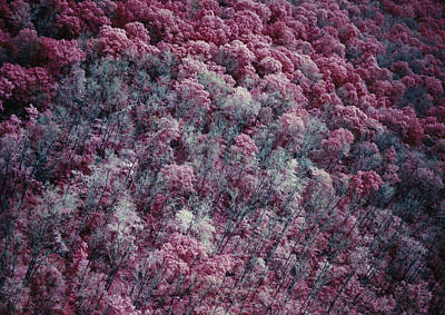 Photograph - Ir Image Of Moth-damaged Forest by Robert Noonan