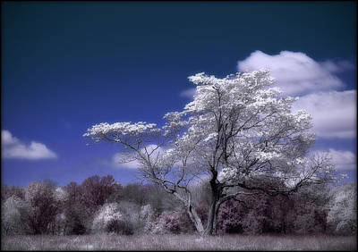 Photograph - Ir Tree by Rick Mosher