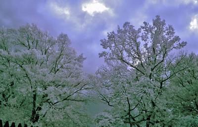 Photograph - Ir Trees by Thomas  MacPherson Jr