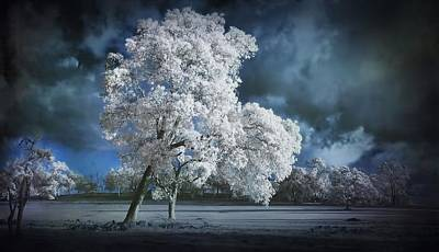 Infared Photograph - Ir View by Kym Clarke