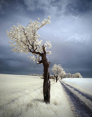 Infrared Photograph - Irenka by Piotr Krol (bax)