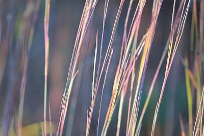 Photograph - Wild Grass At Wachusett Reservoir 2 by Michael Saunders