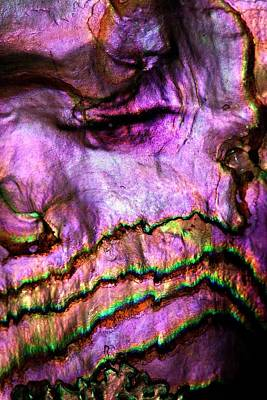 Abalones Photograph - Iridescent Nacre Abalone Shell Colour by Paul D Stewart