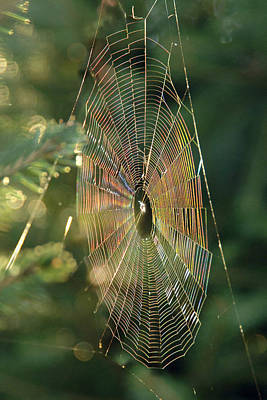 Photograph - Iridescent Spiderweb by Francesa Miller