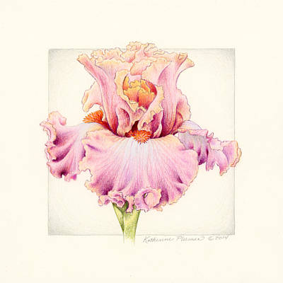 Bearded Iris Drawing - Iris 2 Abiding Love by Katherine Plumer