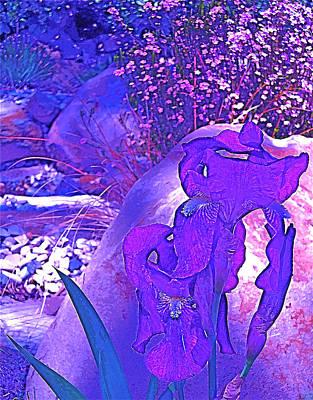 Art Print featuring the photograph Iris 2 by Pamela Cooper