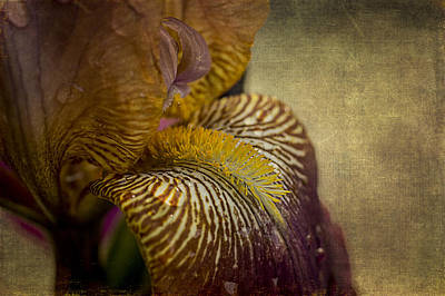 Photograph - Iris 2 by Wayne Meyer