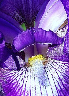 Photograph - Iris 24 by Allen Beatty