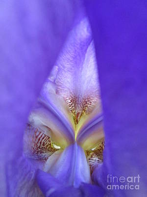 Anchor Down - Iris 26 by Virginia Simmons