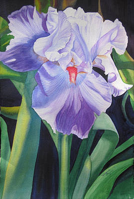 Painting - Iris A Bearded Beauty by Teresa Beyer