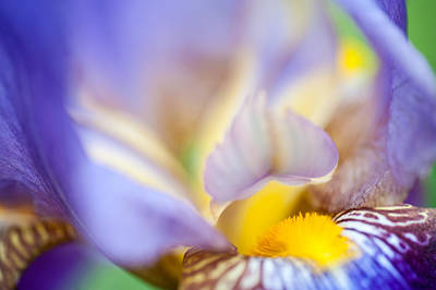 Iris Abstract 1. Macro Art Print by Jenny Rainbow