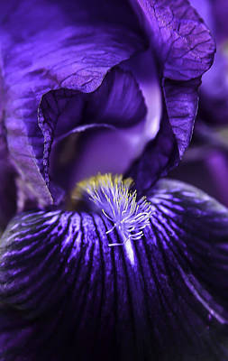 Photograph - Iris-abstract-29 by Rae Ann  M Garrett