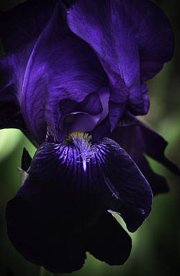 Photograph - Iris-abstract-30 by Rae Ann  M Garrett