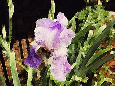 Photograph - Iris by Alan Lakin