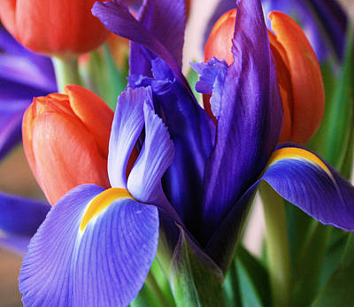 Photograph - Iris And Tulips by Gerry Bates
