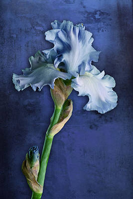 Photograph - Iris Art Cyan And Blue by Bob Coates