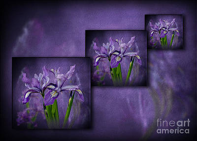 Photograph - Iris Art by Shirley Mangini