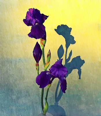 Photograph - Iris At Sunrise by Chris Berry