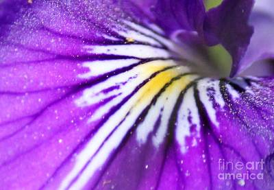 Photograph - Iris Attraction by Erica Hanel