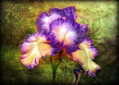 Iris Beauty Art Print by Lilia D