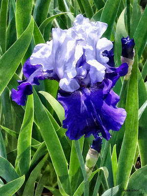Photograph - Iris Best Bet by Susan Savad
