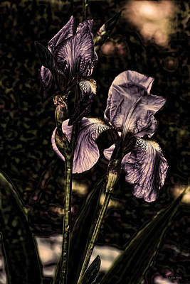 Photograph - Iris Blooms Light Purple by Lesa Fine