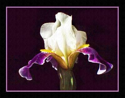 Iris Blossom Original