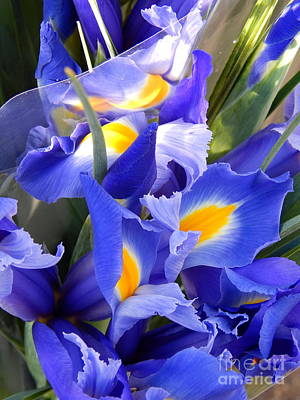 Iris Blues In New Orleans Louisiana Art Print by Michael Hoard