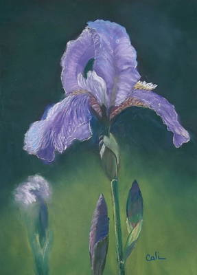 Painting - Iris by Calliope Thomas