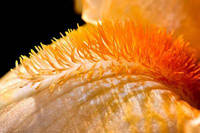 Photograph - Iris Caterpillar by Tomasz Dziubinski